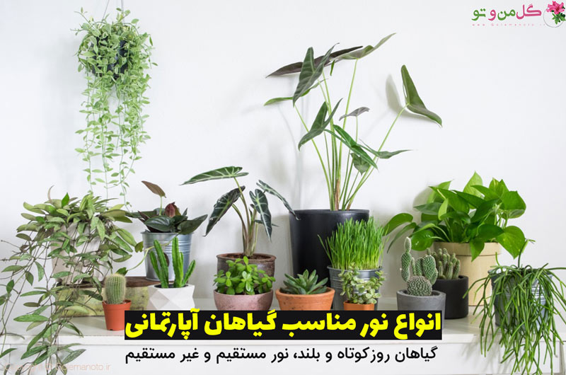 نور گیاهان آپارتمانی