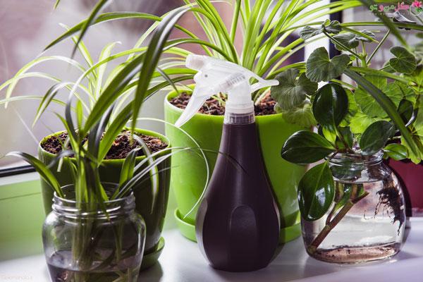نوشابه برای گیاهان آپارتمانی مضر است