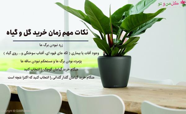 نکات مهم قبل از خرید گیاهان آپارتمانی
