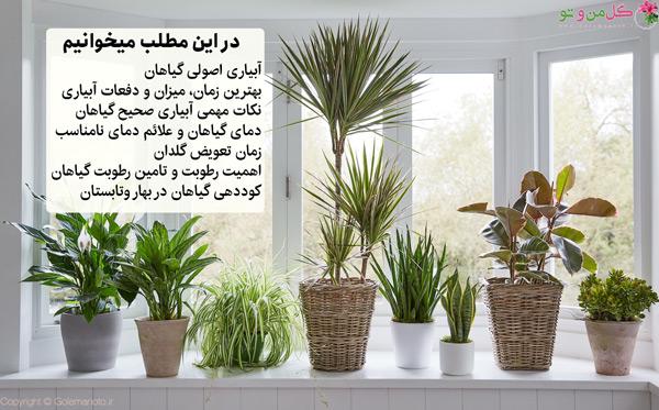 شرایط نگهداری گیاهان در بهار و تابستان
