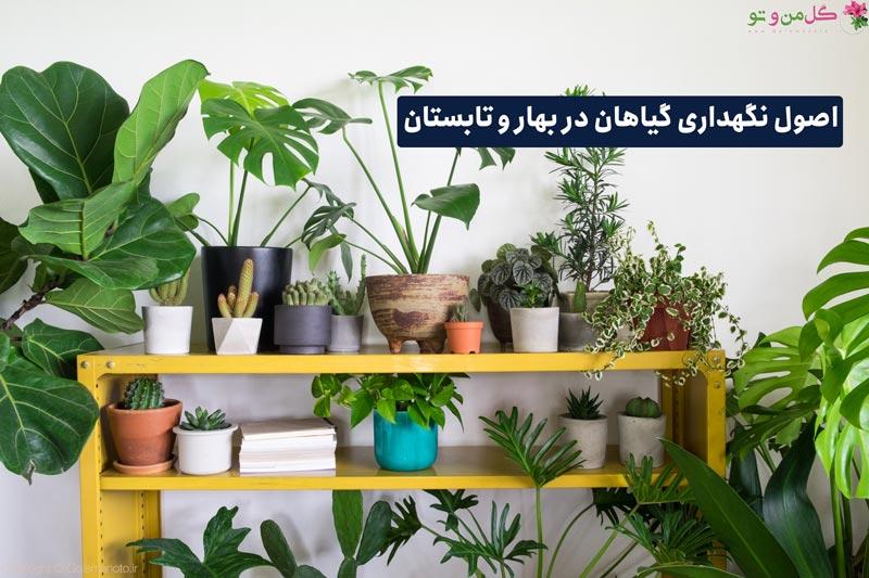 اصول نگهداری گیاهان در بهار و تابستان