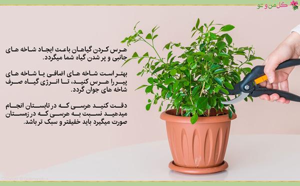هرس و نگهداری گیاهن در بهار و تابستان