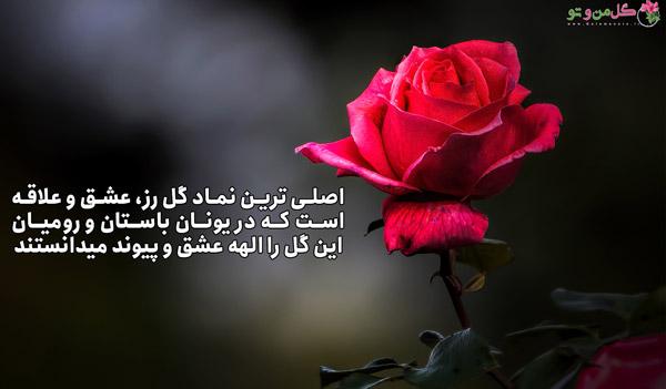 گل رز نماد چیست؟