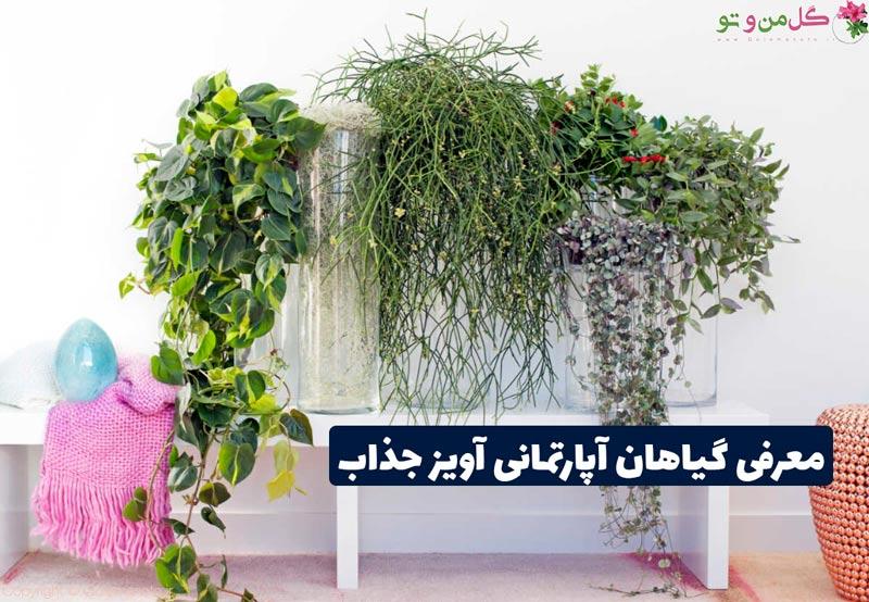 گیاهان آویز آپارتمانی