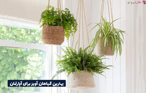 انواع گیاهان آپارتمانی آویز