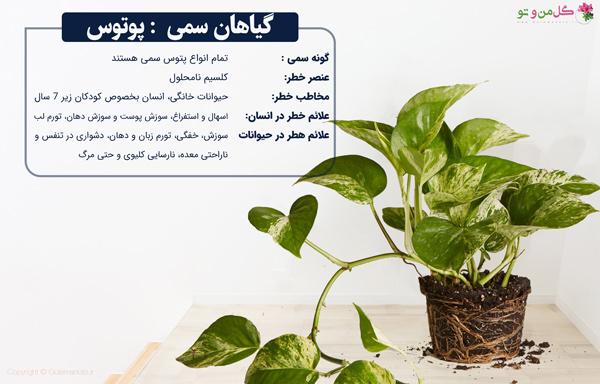 گیاهان خانگی سمی پوتوس