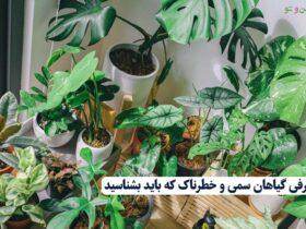 گیاهان سمی که باید شناخت