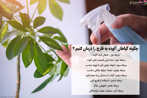 از بین بردن قارچ گیاهان