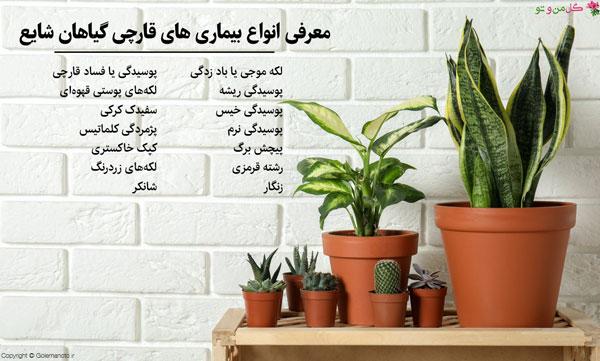 انواع بیماری قارچی گیاهان