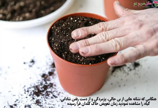 تعویض خاک برای کاکتوس