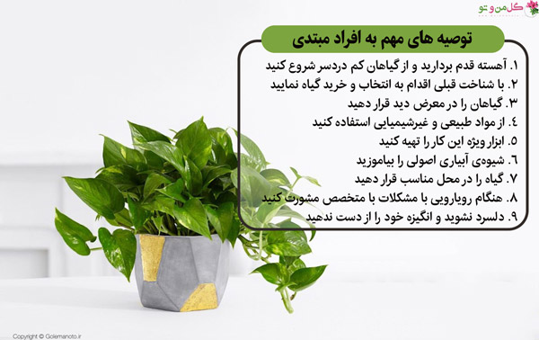 توصیه به افراد مبتدی در نگهداری گل و گیاه