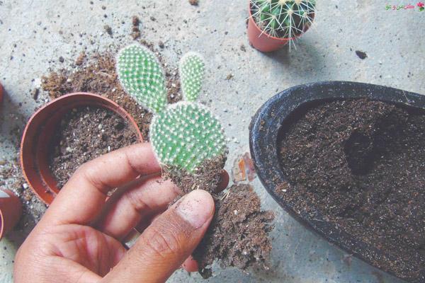 خاک های مناسب کاکتوس