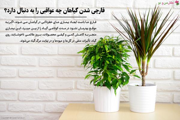 قارچی شدن گیاهان