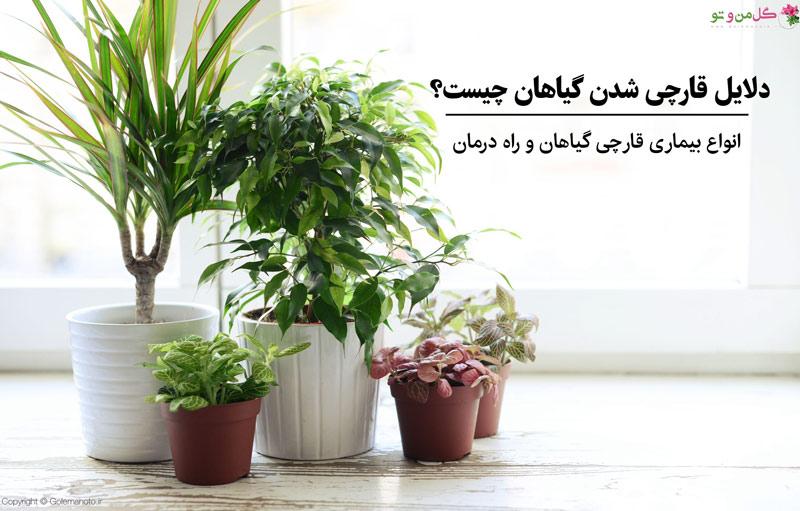 قارچ گیاهان آپارتمانی