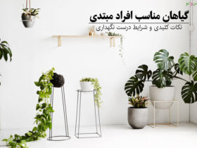 گیاهان مناسب افراد مبتدی