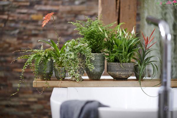 اسپاتی فیلوم از گیاهان مناسب سرویس بهداشتی