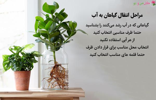انتقال گیاهان به آب