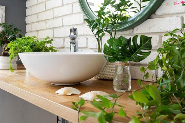 برگ انجیری از گیاهان مناسب سرویس بهداشتی