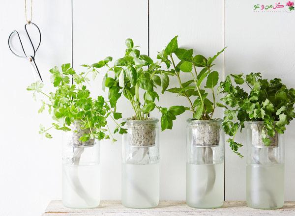 روش هیدروپونیک و گیاهان مناسب آب