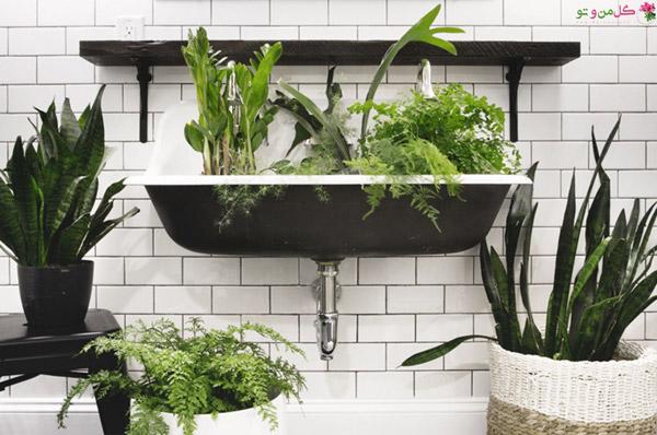 سانسوریا از گیاهان مناسب حمام