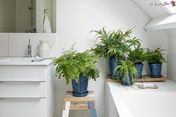 سرخس ها گیاهان مناسب حمام و سرویس