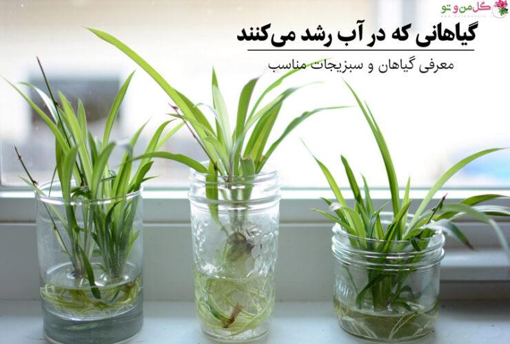 گیاهان مناسب آب