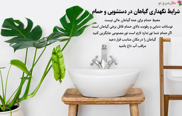 شرایط گیاهان مناسب حمام و سرویس بهداشتی