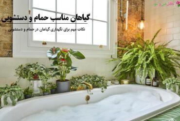 گیاهان مناسب دستشویی و حمام