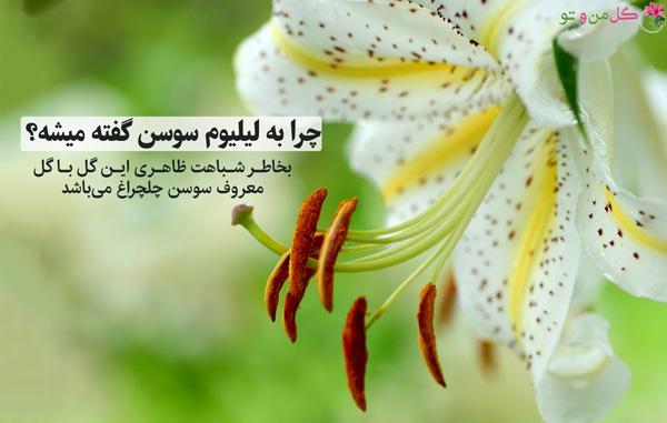 نامگذاری گیاه لیلیوم یا سوسن
