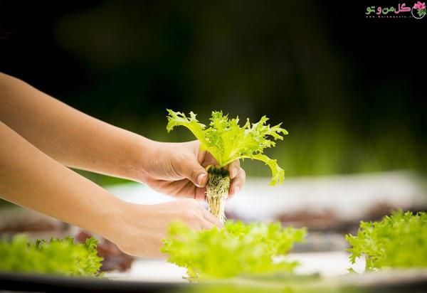 کاشت سبزی به روش هیدروپونیک