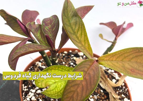 نگهداری از گیاه فردوس