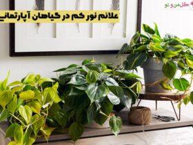 علائم کم بودن نور گیاهان آپارتمانی