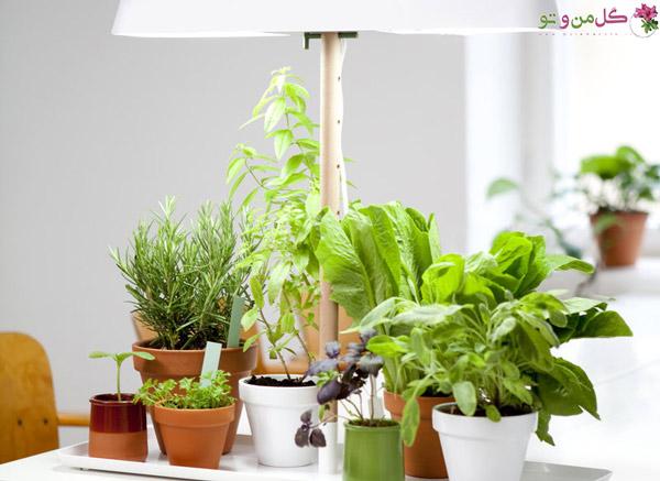 نور رشد برای گیاهان